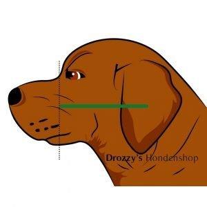 Wanglengte hond